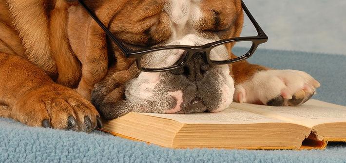 dog reading_edited.jpg