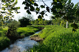 210709-agroforestry-pennsylvania-riparian-buffer-watershed-protection-quality-economics-in