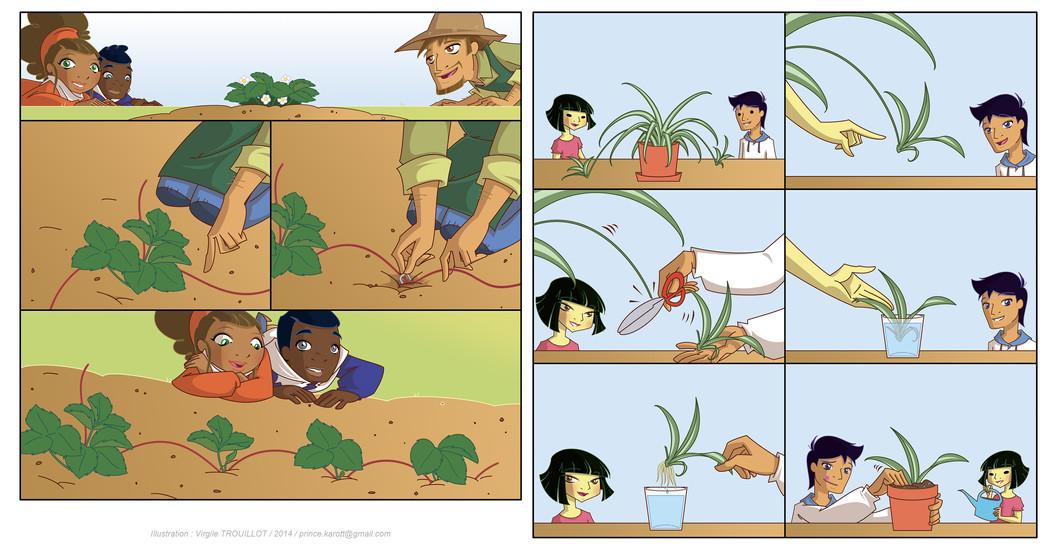 LESSON 11 (Vegetative Reproduction)
