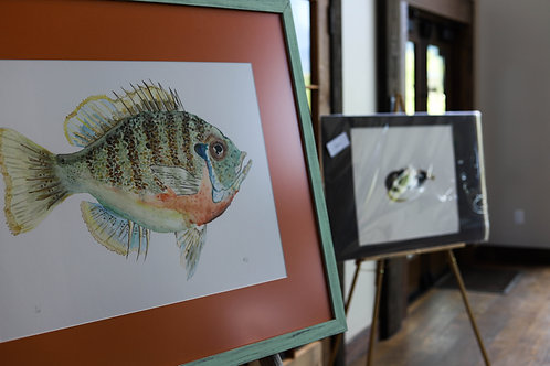 The Blue Gill 24 X 36 Giclee Print