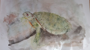 Moss Back Turtle