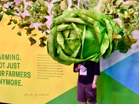 cabbage_w.jpg