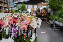 Orchidées.jp2