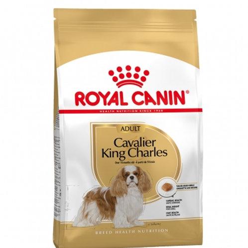 RC Cavalier King Charles 1.5 kg