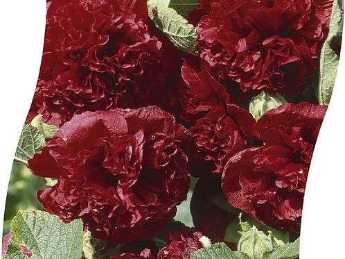 ALCEA Rosea 'Pleniflora' Rood Pot 11 cm