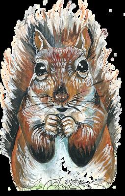squirrelimagenobackground..png