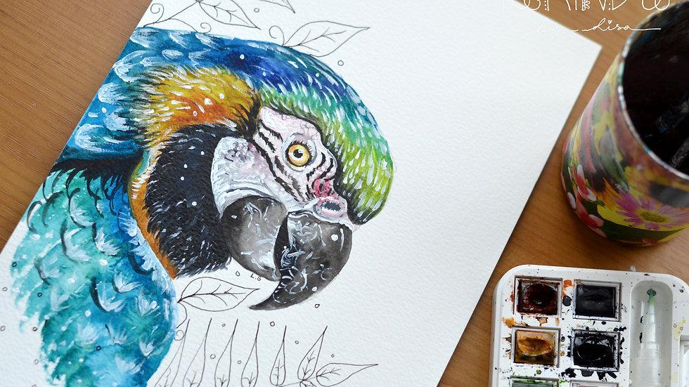 Original Watercolour Painting (Macaw))