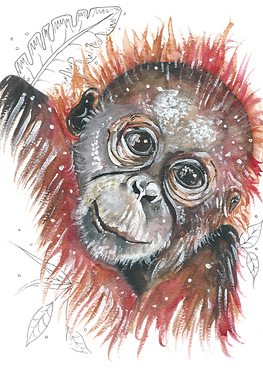 Watercolour painting of an orangutan