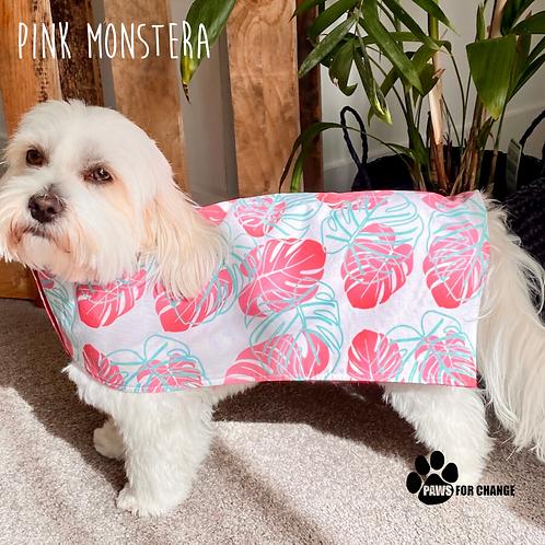 Pink Monstera