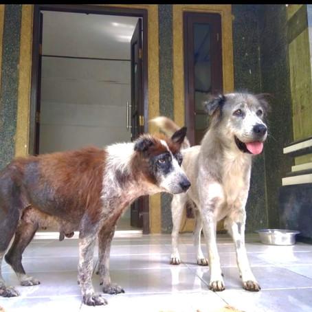 Bali Senior Dog Safe House