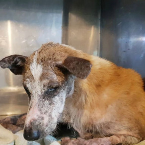 MADAM ORI - ANOTHER SENIOR RESCUED FROM THE STREETS