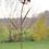 Blume Amelie; Metallprodukt; Rost; Blüte; Vidroflor; 68001; Galarosa; Stahlblech; Garten