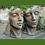 Vidroflor; Gesicht Mann und Frau; klein; Köpfe; Steinguss; antik; 116500R; 116501R