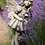 Flower Fairy; Vanilleblume; Steinguss; 8025; Vidroflor; Blumenfee; Blumenelfe; Elfe; Lavendel; Fairies; Galarosa; Skulptur