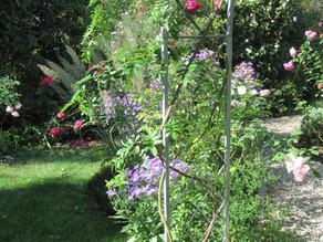 Herbstpflege der Rosen - Wissenswertes zur Rosenpflege im September und Oktober