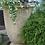 Vidroflor; Gefäß; Tumba; Antik; grau; 114070; Geranie; Steinguss; Pflanztopf; griechisch; Pflanzgefäß; Blumentopf