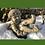 Elf; purzelnd; Acorn; Eichel; Steinguss; Vidroflor; Fiona Scott; PGS044; Pheebert's; Gartenfigur; Gartenelf