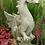 Drache Halvard; Fiona Scott; Vidroflor; PGS053; Steinguss; grau; Antik; Fantasiefigur; Gartenfigur; Galarosa; Skulptur; Deko