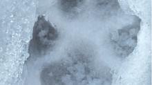 Considerazioni fotografando il lupo.