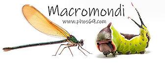 macromondi.jpg