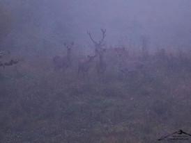 Il Bramito del cervo 2016