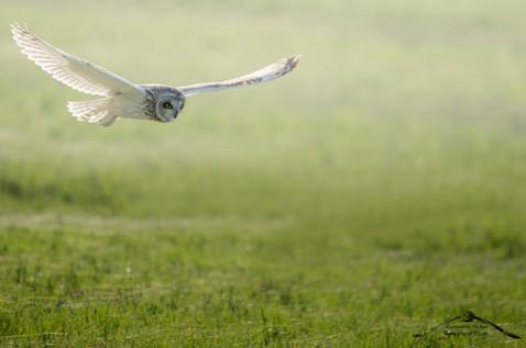 A caccia planando
