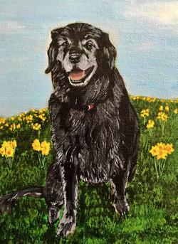 dog, pet, animal, painting, acrylic