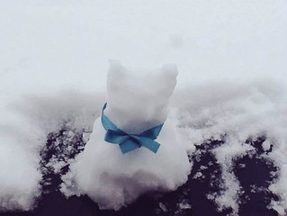 Blog 17: Snowcats and other stories