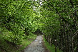 Path Through Woods.jpg