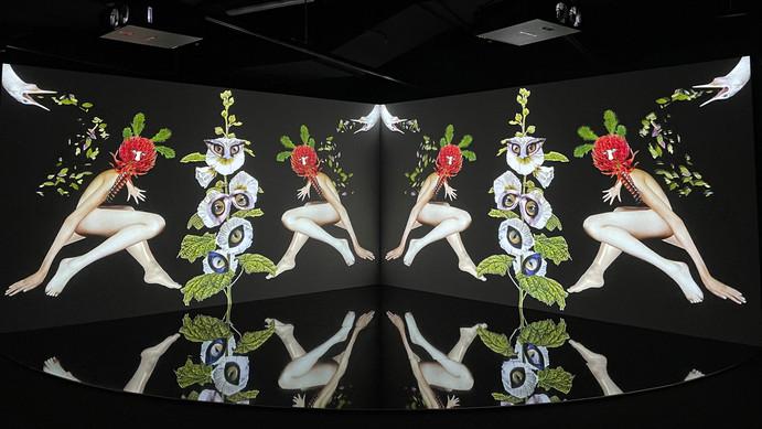 Deborah Kelly Art Installation