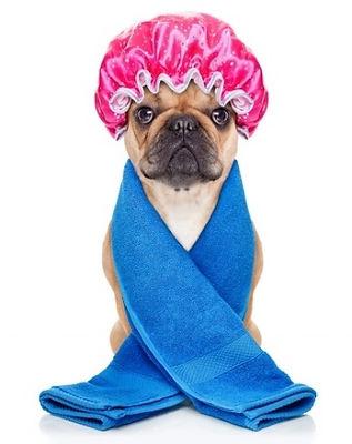 Dog-spa-day.jpg