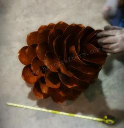 Large yard pine cones