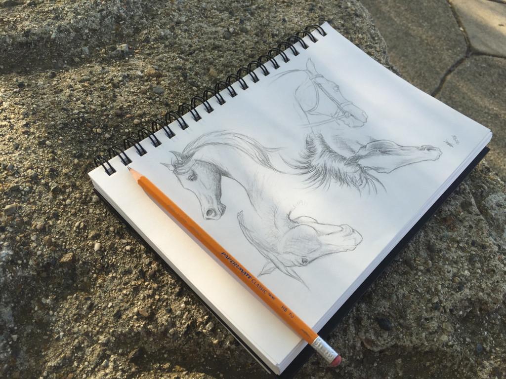 Horse Head Studies