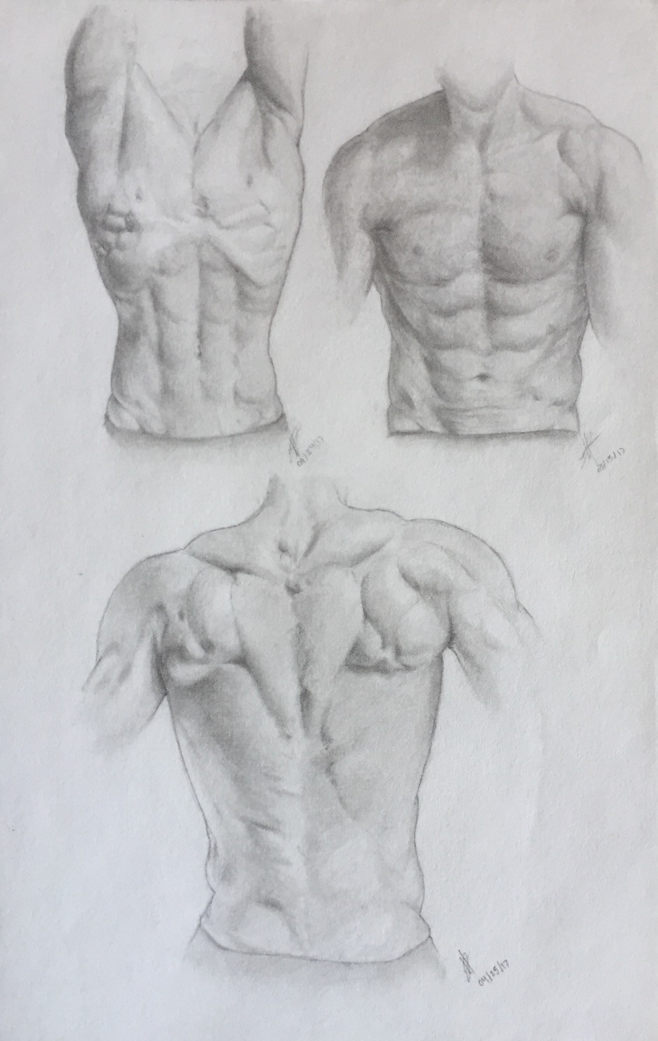 Anatomy Studies from Bodies-In-Motion
