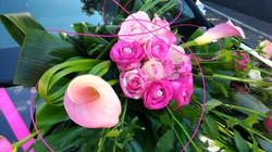 arum fushia