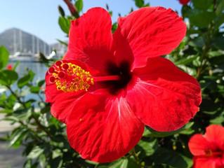 Recette de Tarte Aux Fleurs!!!