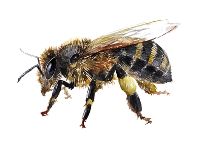 bee-why-need-2.png