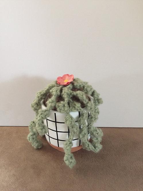 Carefree cactus