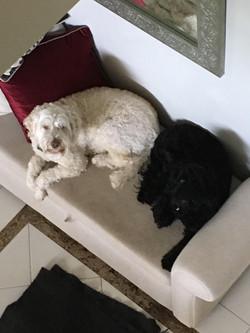 Millie & Luca