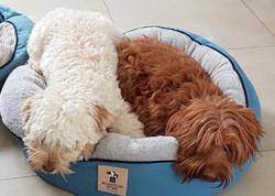 Snuggle Sisters