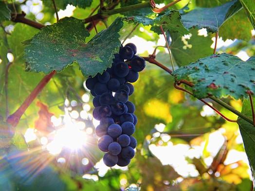 Chemik vytvoril kávu s antioxidantmi, ktoré nájdeme v červenom víne