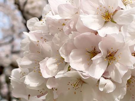 お花の季節🌼🌸🌷