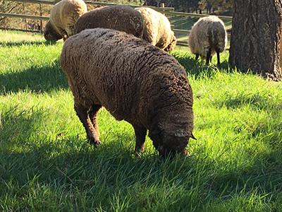 Lizzie in full fleece