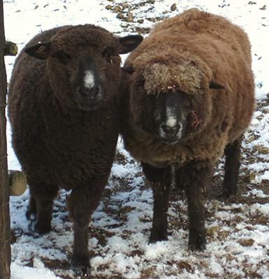 Delilah and Harriett