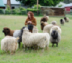 Katrina and the Sheep.jpg