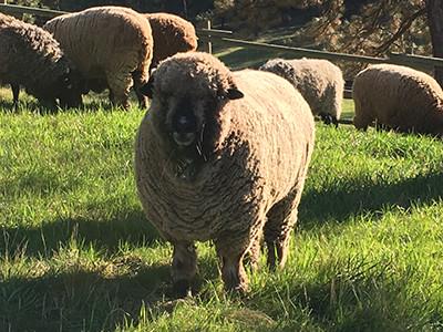 Jake in full fleece
