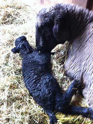 Newborn Mia