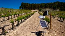 EMINA reduce en un 40% los tratamientos en sus viñedos gracias a la investigación