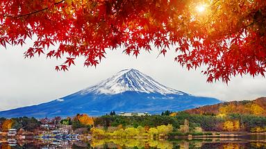 Fuji in Autumn.png