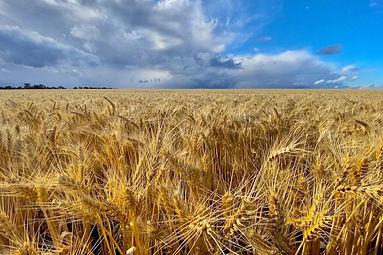 Mount Burdett Farm Crop